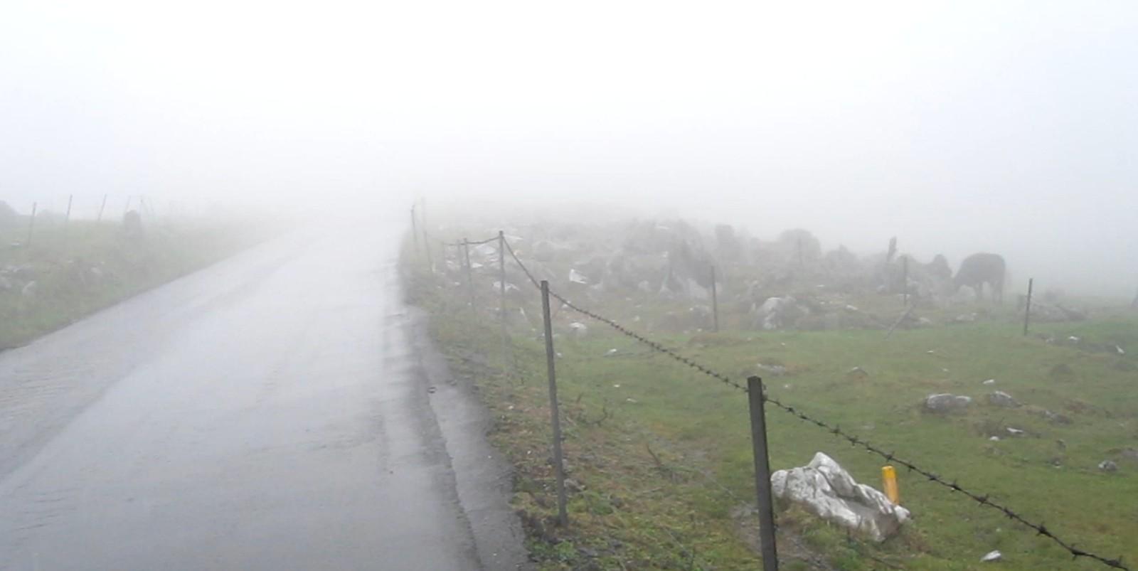 雨と霧の四国カルスト、天狗高原